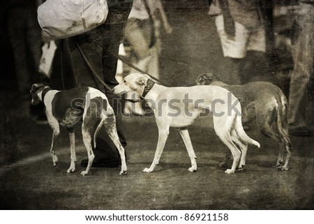 vintage style picture of three greyhounds in an urban scene