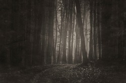 vintage style sepia photo of a dark forest