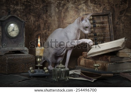 Vintage styled photo of Don Sphinx cat reading the book