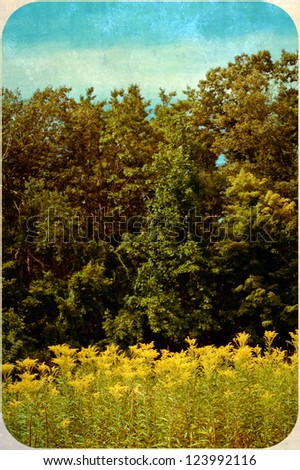 Vintage styled photo with rounded edge corners of a ragweed meadow and forest trees.