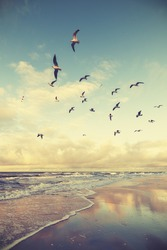 Vintage stylized flying birds above a beach at sunset.