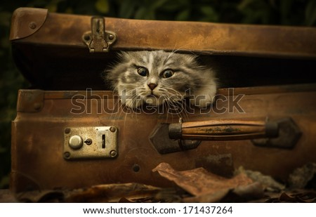 vintage suitcase with cat puppy