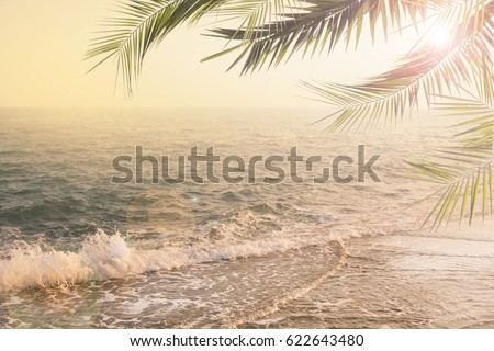 vintage summer background with palms #622643480