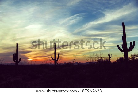 Vintage sunset and isolated giant saguaro cactus tree at Saguaro National Park, Arizona America / USA / Cactus / Wild West / New Mexico / Las Vegas / Sunset / Sky Background\ Desert sunset