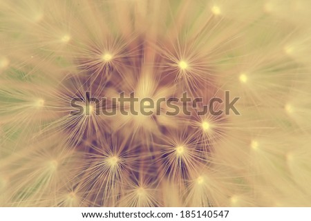 Vintage super macro photo of dandelion
