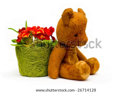 Vintage teddy with primrose flowers