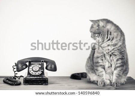 vintage telephone and big cat...