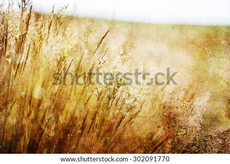 vintage textured picture of a meadow with blowing grass ears