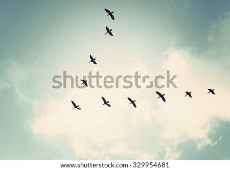Vintage tone color / Birds in the  sky.