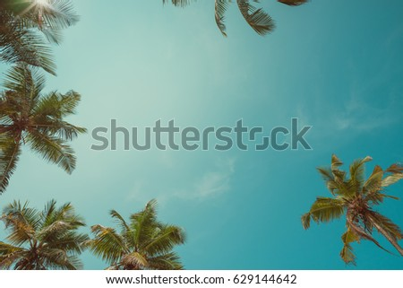 vintage toned palm trees over...