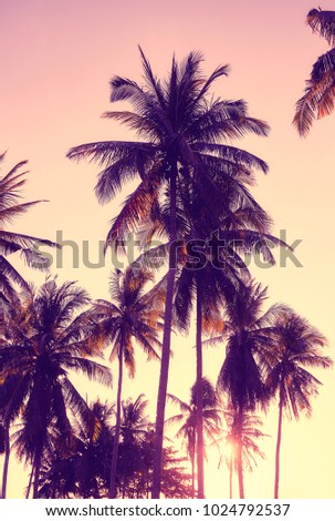 Vintage toned picture of coconut palm trees silhouettes at sunset, vacation concept.