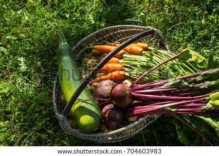 vintage vegetables in the...
