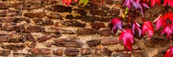 Vintage wall with vivid ivy leaves, copy space. Red Old Brick Backdrop. Autumn red leaves background, banner