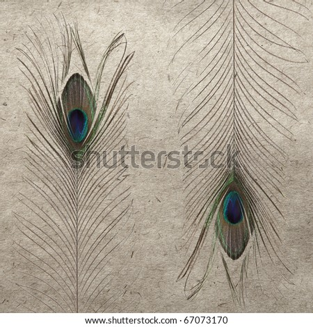 vintage wallpaper background with feather