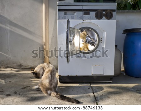 vintage washing machine with a cat and  a teddy bear inside