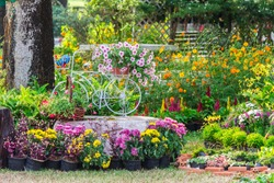 Vintage white bike and flowerpot in cozy home flower garden on summer.