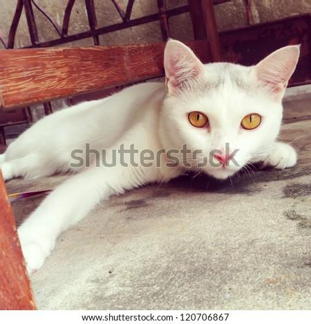 vintage : White cat kitten is sleeping and looking