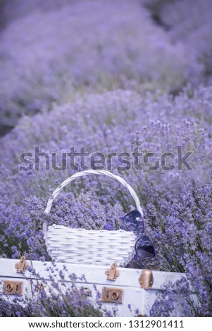 Vintage white suitcase and a white basket with lavender flo in a lavender field.  #1312901411