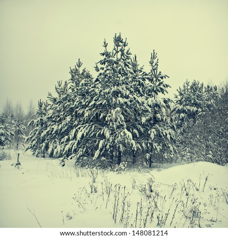 vintage winter forest background - stock photo