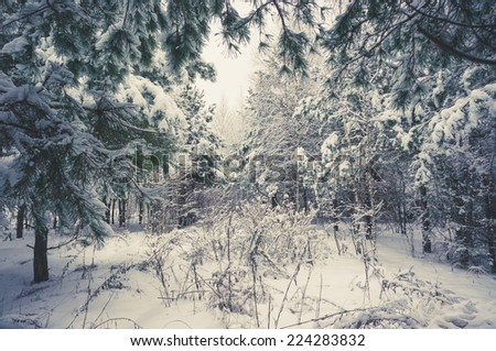 Vintage winter landscape. Light and trees covered with snow