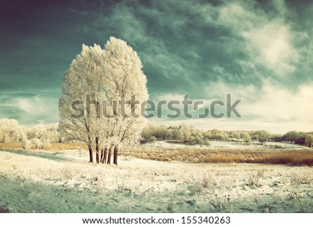 Vintage winter landscape with frozen tree in field and blue sky with clouds