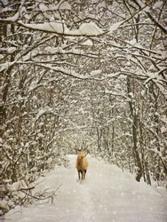vintage winter photography