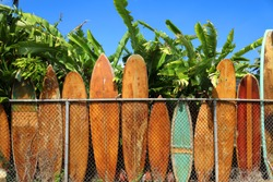 Vintage Wooden Surfboards leaning on fence under palms in Oahu Hawaii