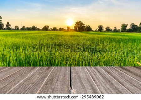 Vintage wooden texture with rice field in the morning. #295489082