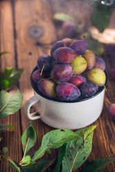 Violet and green plums in white metal cup with green leaf and water drops on brown wooden background. Summer fruits harvest.