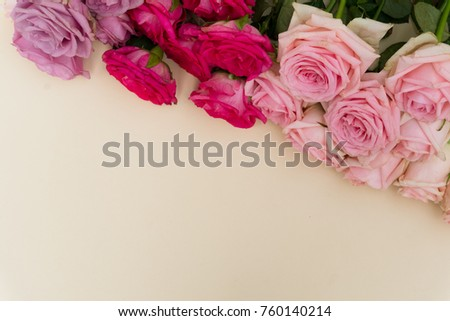 Violet and pink blooming fresh rose flowers background with copy space