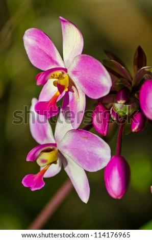 Violet blossom