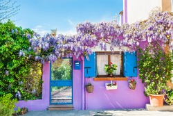 Violet house with violet flowers. Colorful houses in Burano island near Venice, Italy