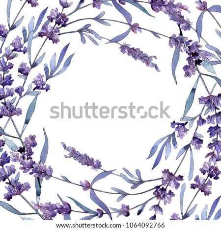 Violet lavender. Floral botanical flower. Wild spring leaf wildflower frame. Aquarelle wildflower for background, texture, wrapper pattern, frame or border.