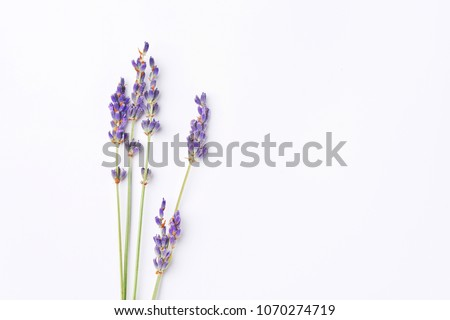 violet lavender flowers arranged on white background. Top view, flat lay. Minimal concept. Dry flower floral composition. Pastel colors. #1070274719