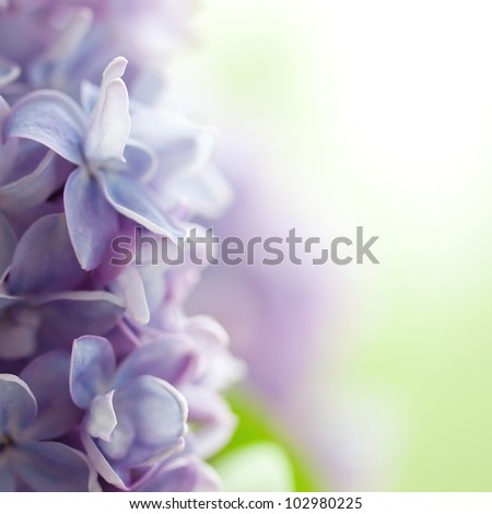 Violet lilac background