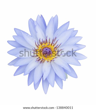 violet lotus on isolate background