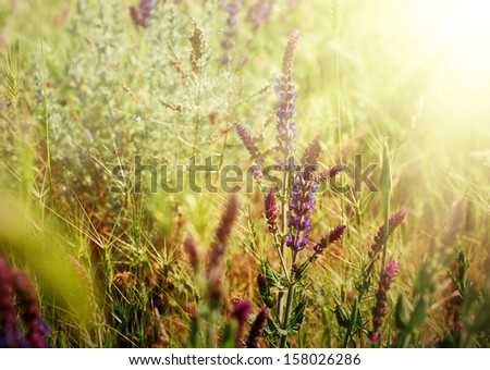Violet meadow flower with sun rays, floral vintage background
