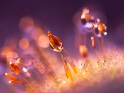 Violet moss