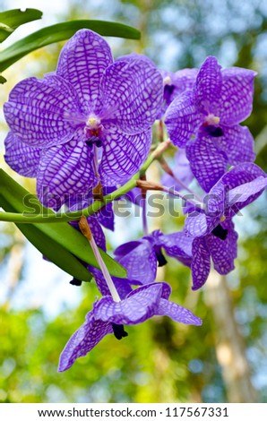 Violet orchid blossom - stock photo