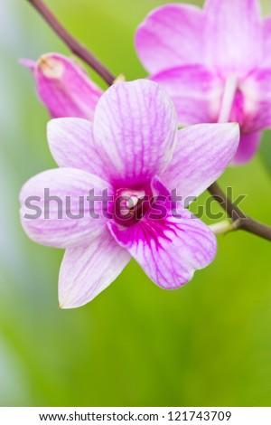 Violet orchid branch.