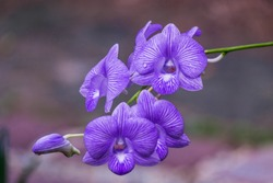 Violet orchid flower texture abstract background. Color of the year 2018 ultra violet
