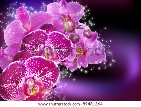 Violet orchid flowers and stars