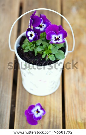 Violet pansies in a romantic bucket on a wooden table