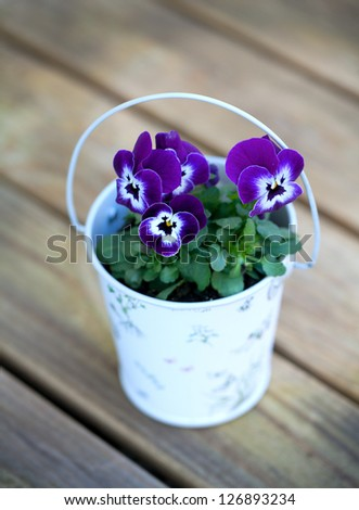 violet pansies on wooden surface
