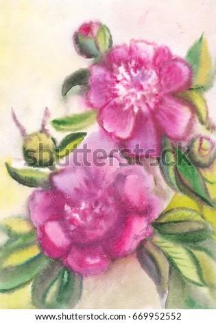 Violet peonies. Drawing on raw paper. Watercolor purple summer flowers