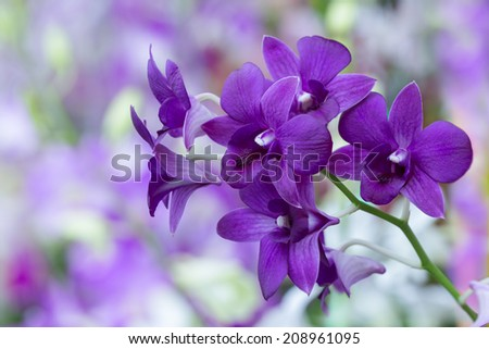 Violet-purple Orchid bloom with soft focus and blur background #208961095