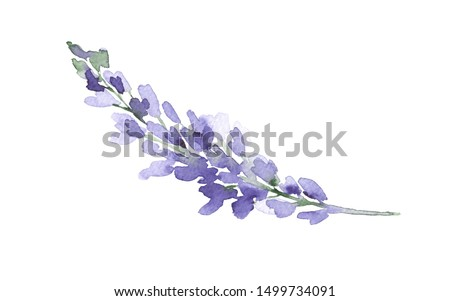 Violet watercolor lupine branch. Colorful floral element isolated on white. Lavender flowers. Spring fresh watercolor illustration. Watercolor sketch.