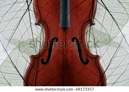 Violin covered with skeletons of autumn leaves