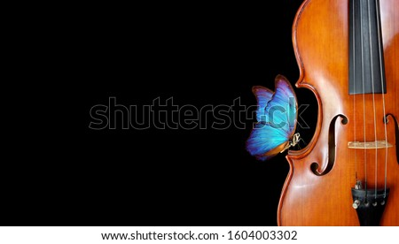 violin isolated on black closeup. beautiful blue butterfly morpho on violin. music concept. copy spaces Сток-фото ©