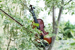 Violin on wood. Musical instrument and spring nature. Blooming maple leaves. Music of love. Melody of spring.